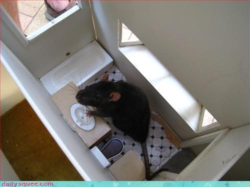 mouse,rodents,sets