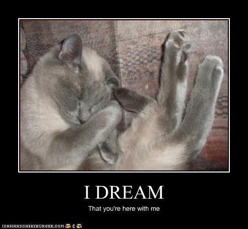 I DREAM
