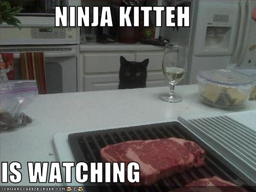 NINJA KITTEH  IS WATCHING