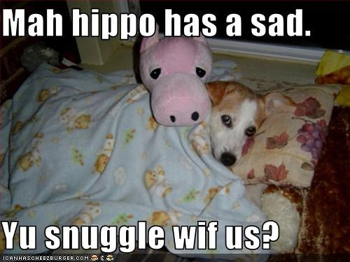 Mah hippo has a sad.   Yu snuggle wif us?