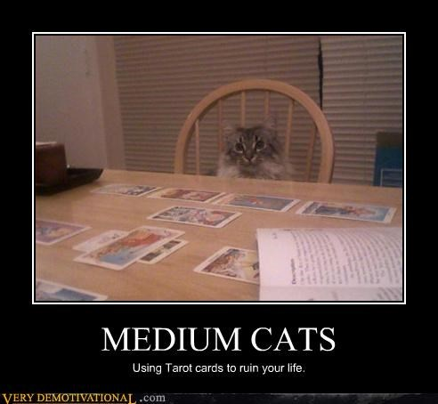 Cats Can Be Psychic?