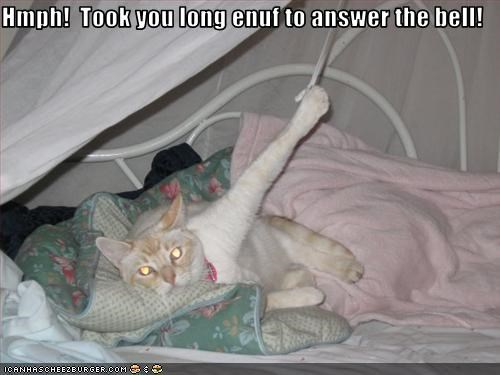 Hmph!  Took you long enuf to answer the bell!