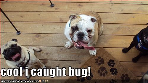 cool i caught bug!