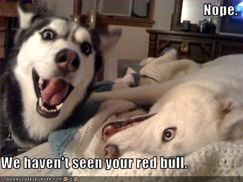 Nope.  We haven't seen your red bull.