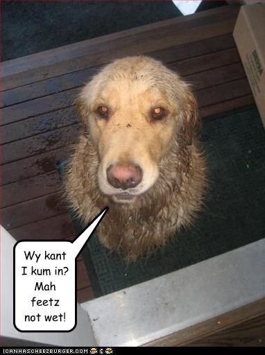 Wy kant I kum in? Mah feetz not wet!