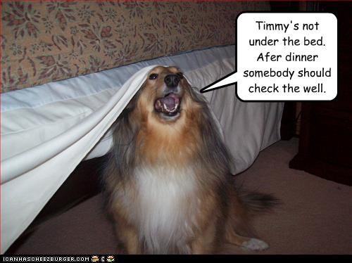 Timmy's not under the bed.  Afer dinner somebody should check the well.