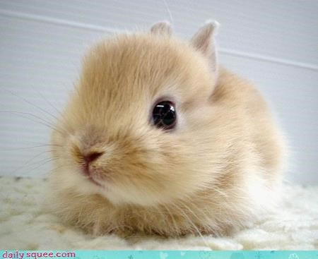 Squee Inducing Bunny :3