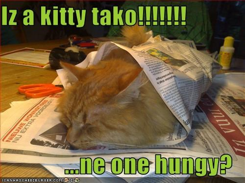 Iz a kitty tako!!!!!!!  ...ne one hungy?