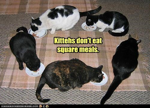 Kittehs don't eat square meals.