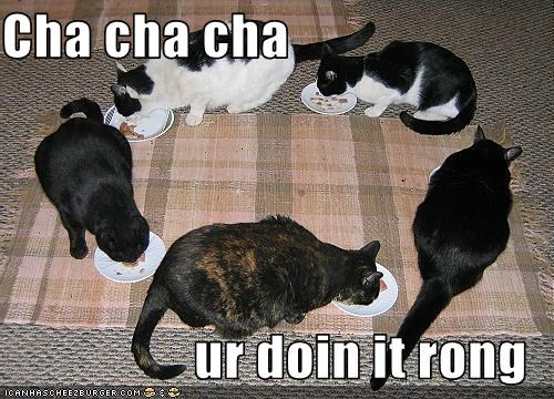 Cha cha cha  ur doin it rong
