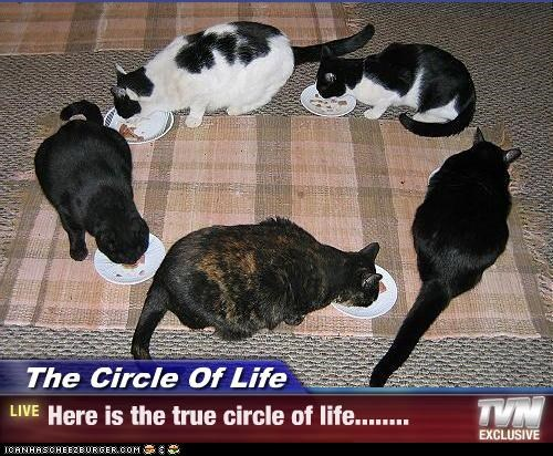 The Circle Of Life - Here is the true circle of life........