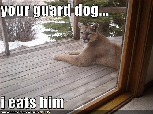 your guard dog...  i eats him