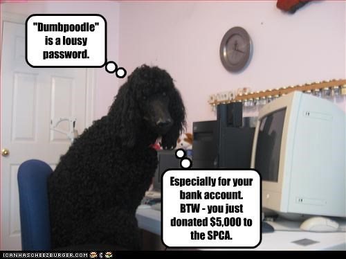 """Dumbpoodle"" is a lousy password."
