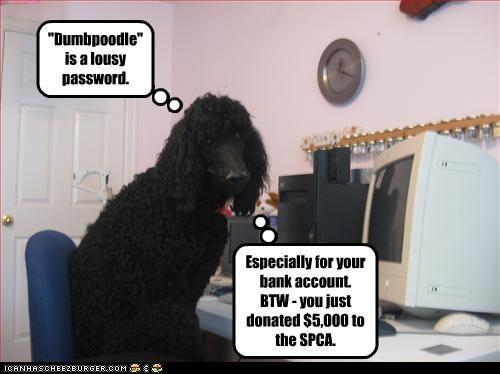"""Dumbpoodle"" is a lousy password."