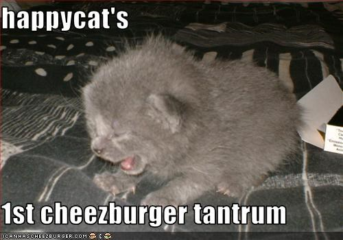 happycat's  1st cheezburger tantrum