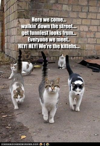 Here we come... walkin' down the street.... get funniest looks frum... Everyone we meet.. HEY! HEY! We're the kittehs...