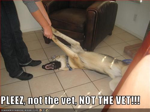 PLEEZ, not the vet, NOT THE VET!!!