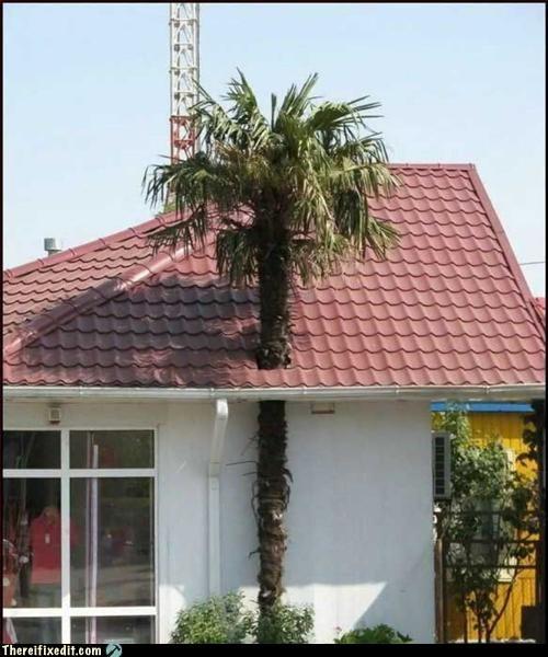 make it fit,roof,tree,tropics,vacation