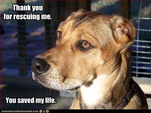 You saved my life.