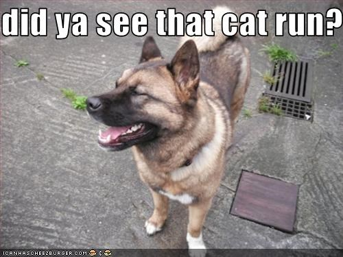 did ya see that cat run??