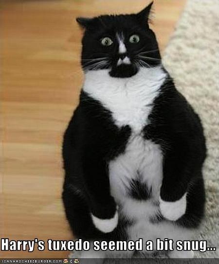 Harry's tuxedo seemed a bit snug...