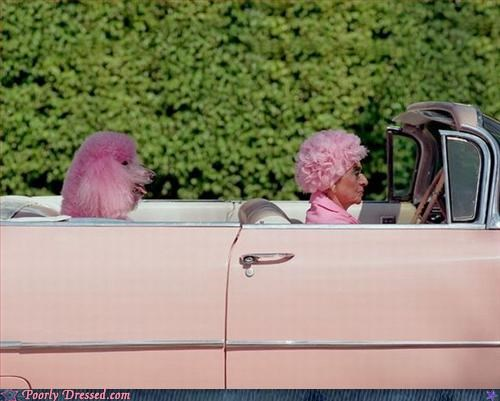 dont-drag-the-dog-into-this,modes of transportation,old people,pink hair