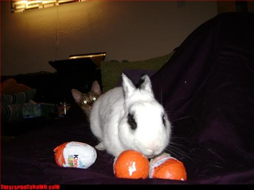 Animal Bomb,bunny,cat,cute,halloween