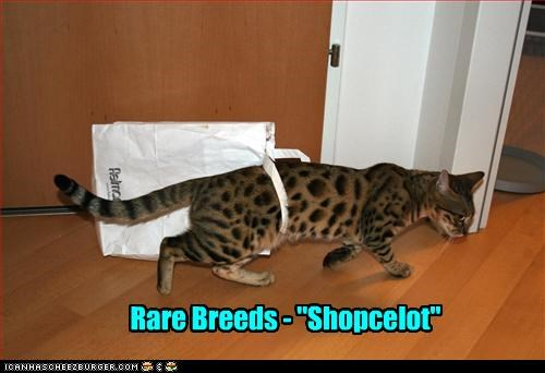 "Rare Breeds - ""Shopcelot"""