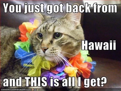 You just got back from Hawaii    and THIS is all I get?