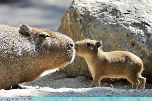 Kissybara