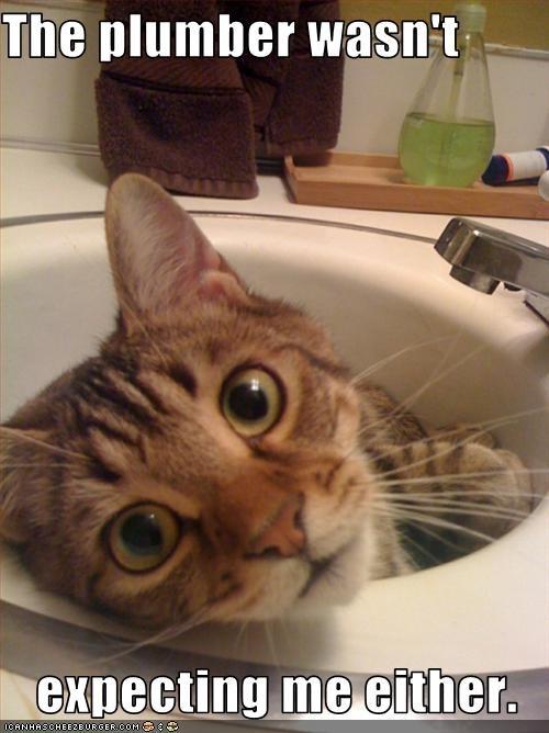 hiding,plumber,sink,surprise