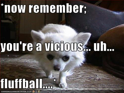 *now remember; you're a vicious... uh... fluffball....*