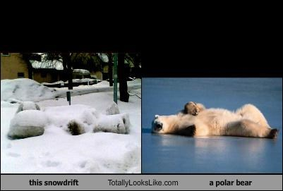 animals,polar bear,snow