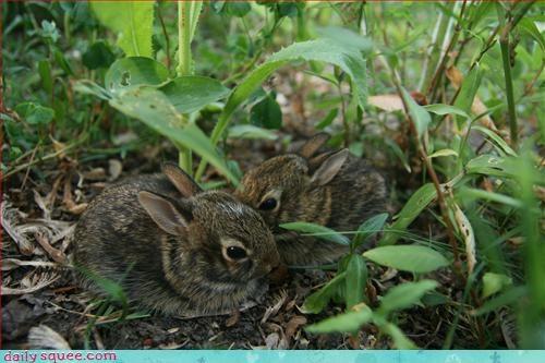 bunny,cute,easter
