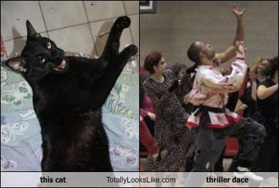 this cat Totally Looks Like thriller dace