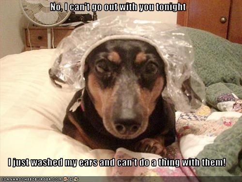 dachshund,dogs,excuse,shower,shower cap