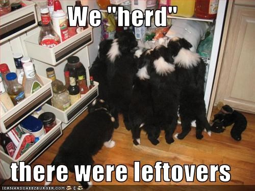 border collie,fridge,leftovers,pileup,puppies