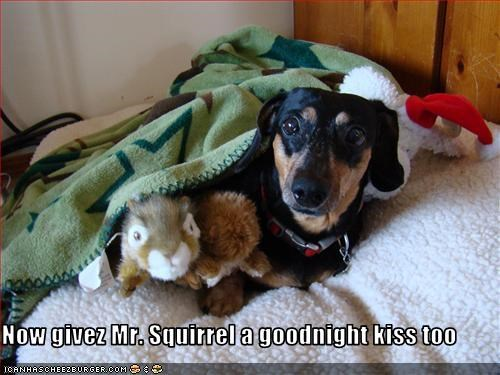 dachshund,dogs,goodnight,squirrel,stuffed animal,toy