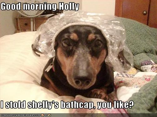 Good morning Holly  I stold shelly's bathcap, you like?