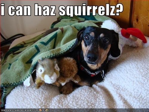 i can haz squirrelz?