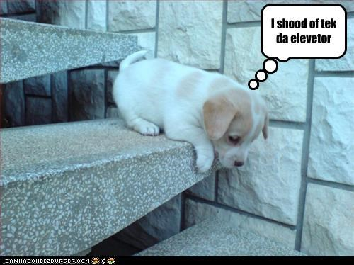 elevator,Hall of Fame,mistake,oops,option,puppy,Sad,should have,stairs,tired,whatbreed