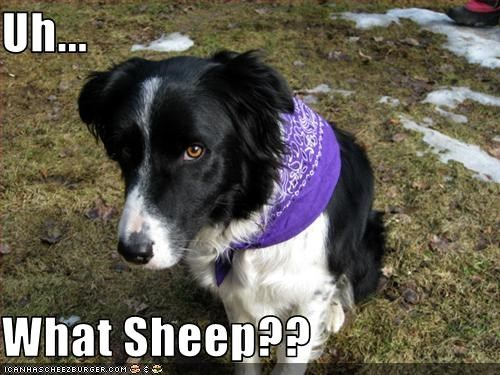 Uh...  What Sheep??
