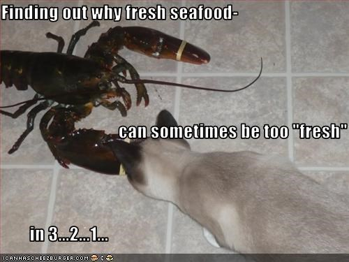 "Finding out why fresh seafood-                                  can sometimes be too ""fresh""         in 3...2...1..."