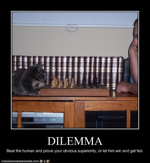 chess,dilemma,games