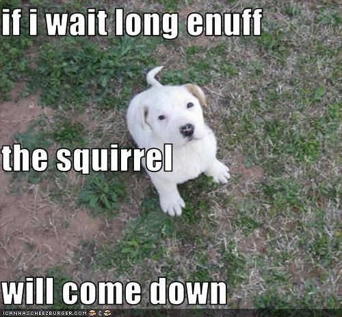 if i wait long enuff the squirrel  will come down