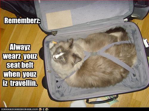 Alwayz  wearz  youz  seat belt when  youz  iz  travellin.