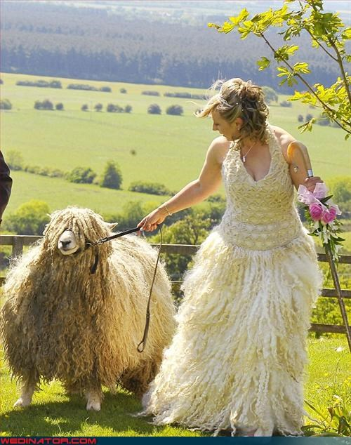 Crazy Brides,crazy dress,Daily Mail,fashion is my passion,Little Bo Peep,love at first sight,sheep,surprise,versatile,were-in-love,Wedding Themes