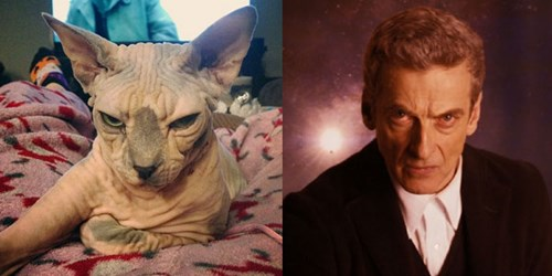 The 12th Doctor Is a Hairless Cat