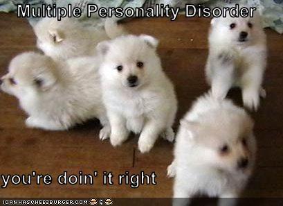 alaskan eskimo dog,crazy,Hall of Fame,multiple,puppies