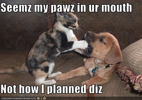 Seemz my pawz in ur mouth  Not how I planned diz